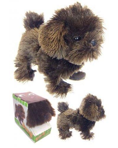 Pete the Pedigree Puppy Pounces