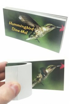Hummingbird Animated Flip Book Slow-Mo
