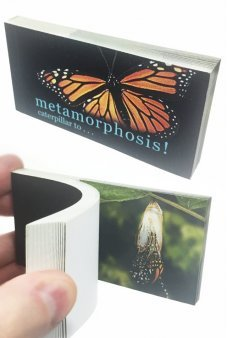 Butterfly Transforms Animated Flip Book